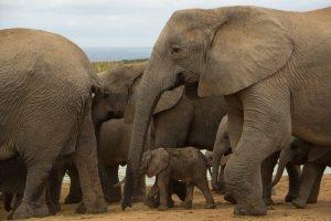 Addo Elephant-Waterhole1
