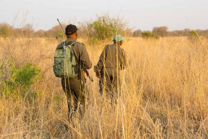 Bushwalk Black Rhino Tense Moment