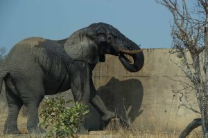 Elephant-Watertank