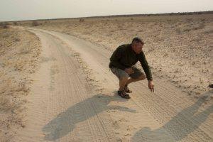 Kalahari Lion Tracking