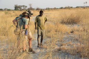 Tracking Game Spoor With Bayei Tribesman Okavango Delta Botswana