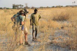 Tracking Game Spoor With Bayei Tribesman Okavango Delta Botswana
