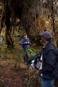The high altitude moss forests of the Western Cordillera - seemed like a Hobbit could appear at any minute....