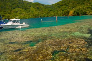 The pristine coral reefs of Milne Bay
